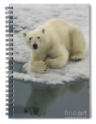 Polar Bear Resting On Ice Spiral Notebook