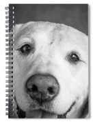 Portrait Of A Boxer Dog And Golden Spiral Notebook