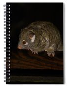 Possum Spiral Notebook