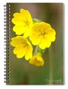 Primula Cowslip Fairy Cups Spiral Notebook
