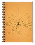 Pyramidal Cell In Cerebral Cortex, Cajal Spiral Notebook