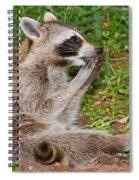 Raccoons Spiral Notebook