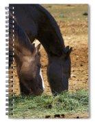 Rancho Oso - California Spiral Notebook