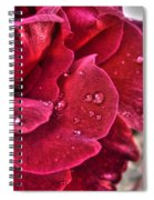 Red Rose And Summer Rain Spiral Notebook
