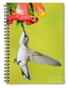 Ruby-throated Hummingbird Female Spiral Notebook