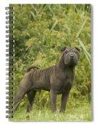 Shar Pei Dog Spiral Notebook