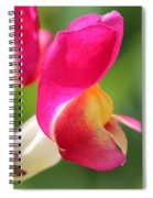 Snapdragon Named Floral Showers Red And Yellow Bicolour Spiral Notebook