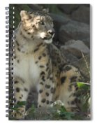 Snow Leopard On The Prowl Spiral Notebook