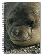 Southern Elephant Seal  Spiral Notebook