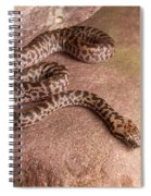 Spotted Python Antaresia Maculosa Spiral Notebook