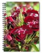 Sweet William Named Sooty Spiral Notebook