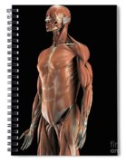 The Muscles Of The Upper Body Spiral Notebook