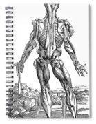 Vesalius: Muscles, 1543 Spiral Notebook