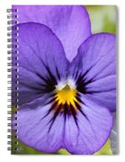 Viola Named Sorbet Blue Heaven Jump-up Spiral Notebook