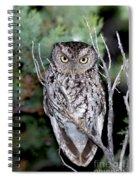 Whiskered Screech Owl Spiral Notebook