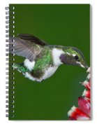 White-bellied Woodstar Spiral Notebook