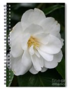 White Camellia Spiral Notebook