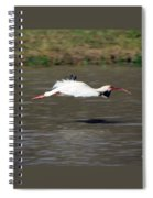 White Ibis In Flight Spiral Notebook