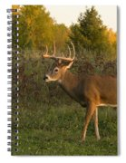 White-tailed Buck In Fall Spiral Notebook