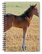 Wild Horse Foal Spiral Notebook