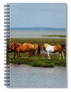 Wild Horses Of Assateague Island Spiral Notebook