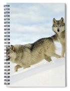 Wolves In Winter Spiral Notebook