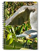 Yellow Crowned Night Heron Spiral Notebook