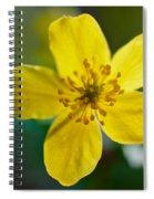 Yellow Wood Anemone Spiral Notebook