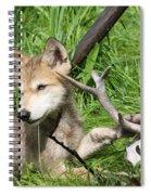 Gray Wolf Pup Spiral Notebook