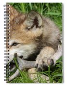 Gray Wolf Pup Spiral Notebook