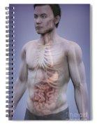Human Anatomy Spiral Notebook