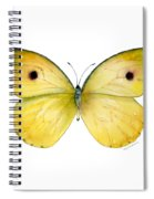 32 Dercas Lycorias Butterfly Spiral Notebook