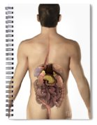 The Digestive System Spiral Notebook