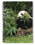 Giant Panda Spiral Notebook