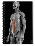 Abdominal Muscles Spiral Notebook