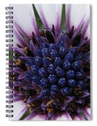 African Daisy Named Soprano White Spiral Notebook