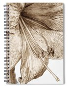 Amaryllis Spiral Notebook