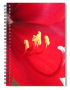 Amaryllis Named Black Pearl Spiral Notebook