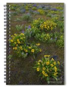 Balsamroot Spiral Notebook