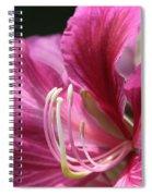 Bauhinia Blakeana - Hong Kong Orchid - Hawaiian Orchid Tree  Spiral Notebook