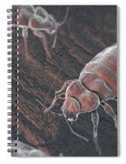 Bed Bugs Cimex Lectularius Spiral Notebook