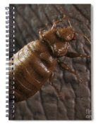 Bedbug Cimex Lectularius Spiral Notebook