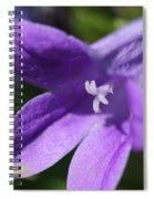 Birch Hybrid Campanula Spiral Notebook