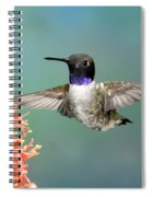 Black-chinned Hummingbird Spiral Notebook