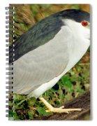 Black-crowned Night-heron Spiral Notebook