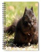 Black Squirrel Spiral Notebook