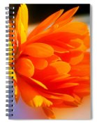 Calendula Spiral Notebook