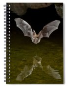 California Leaf-nosed Bat At Pond Spiral Notebook
