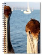 California Pelicans Spiral Notebook