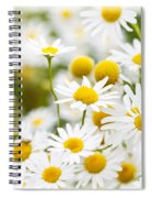 Chamomile Flowers Spiral Notebook
